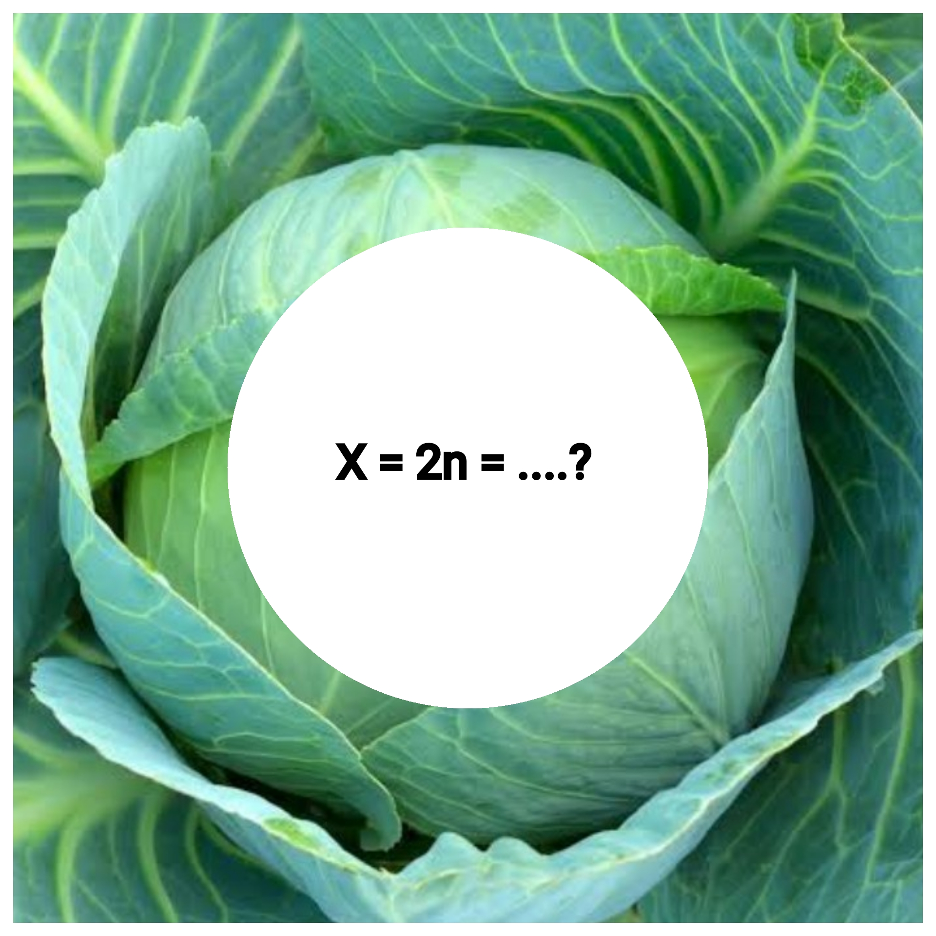 2n-number-of-cabbage